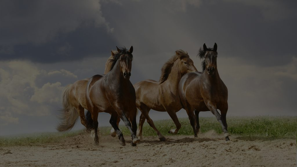 5227bc314a5 Home - Sandra Coachen met Paarden
